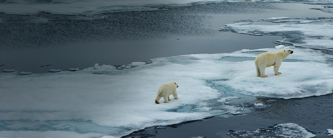 IoT product for polar bear tracking